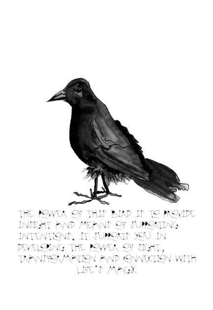 crow2WEBSHOP